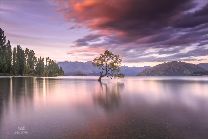 Новая Зеландия, озеро Ванака, путешествие, фототур, закат Знаменитое дерево озера Ванакаphoto preview