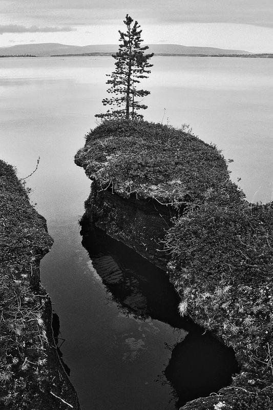 озеро, сосна, берег, край, апатиты Зацепившись за крайphoto preview