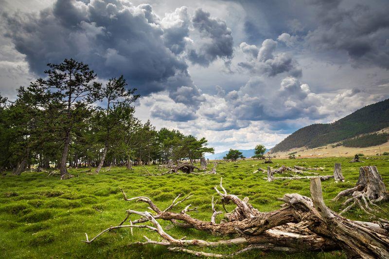 гроза, озеро байкал, коряга, кочки, лето Грозаphoto preview