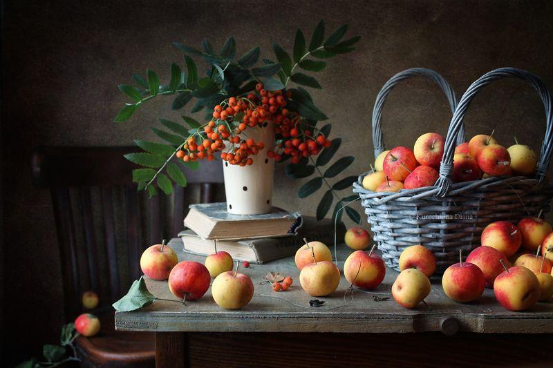 натюрморт, август, яблоки, рябина, кот, наблюдатель Августовские яблочки и наблюдатель)photo preview