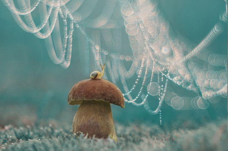 улитка, гриб, природа, паутина И это всё для меня?photo preview