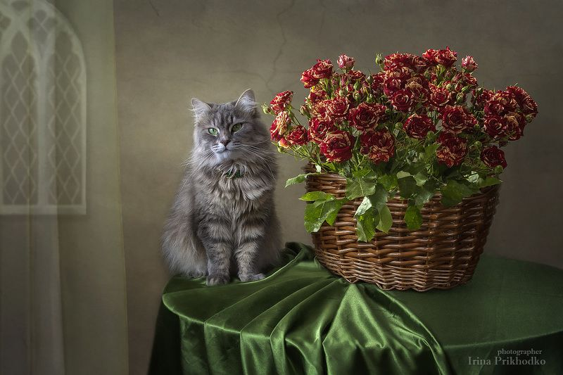 домашние животные, кошки, натюрморт, цветочный, корзина, розы, кошка Масяня Масяня м корзина пёстрых розphoto preview