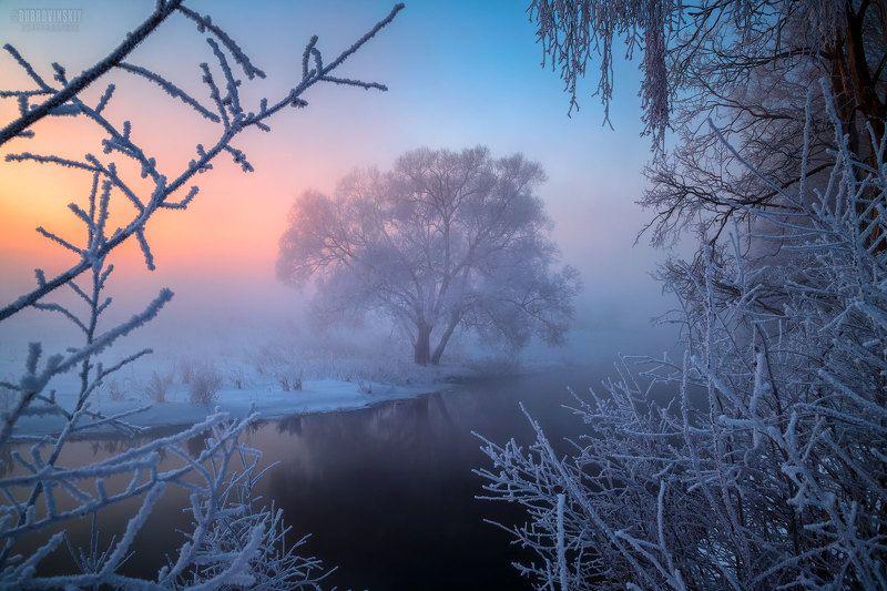 истра, река, дерево, иней, мороз, рассвет В рамках зимы фото превью