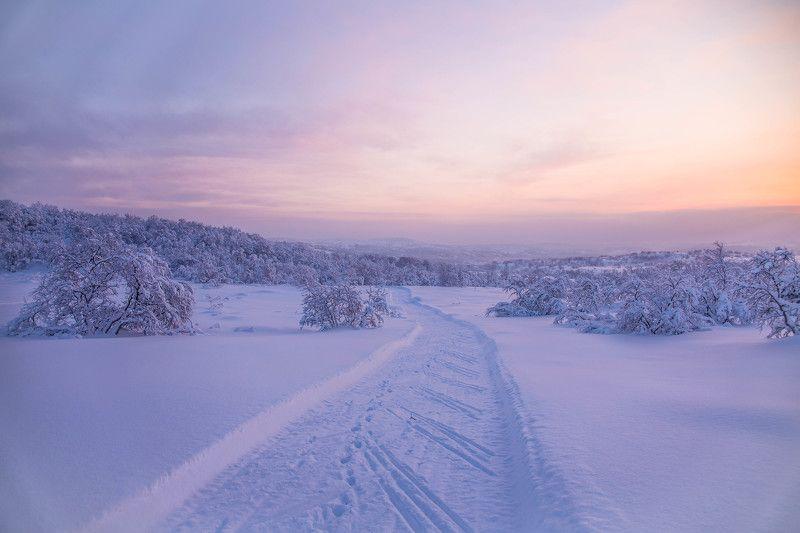 зима, пейзаж, winter, landscape, мороз, кольский край, деревья, закат, солнце \