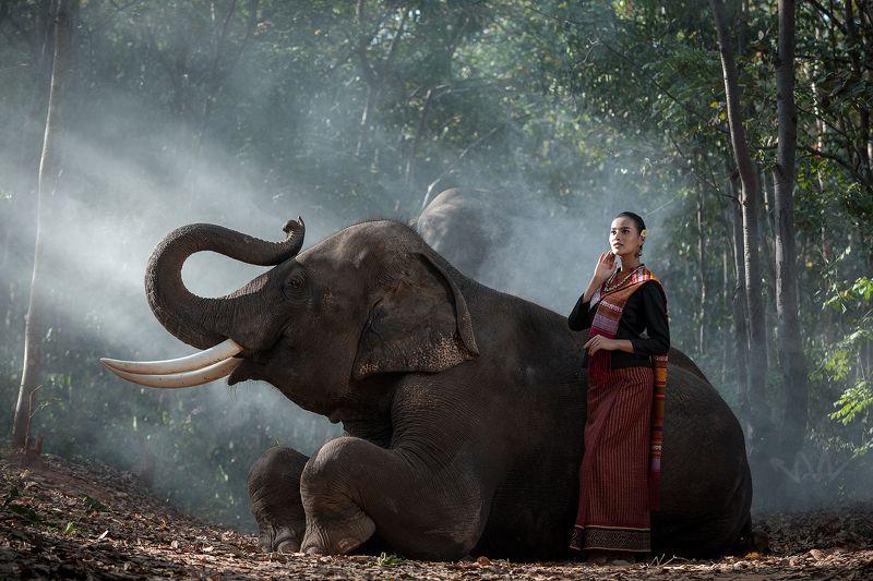 portrait,elephant,woman,Thai,animal Woman and Elephant photo preview