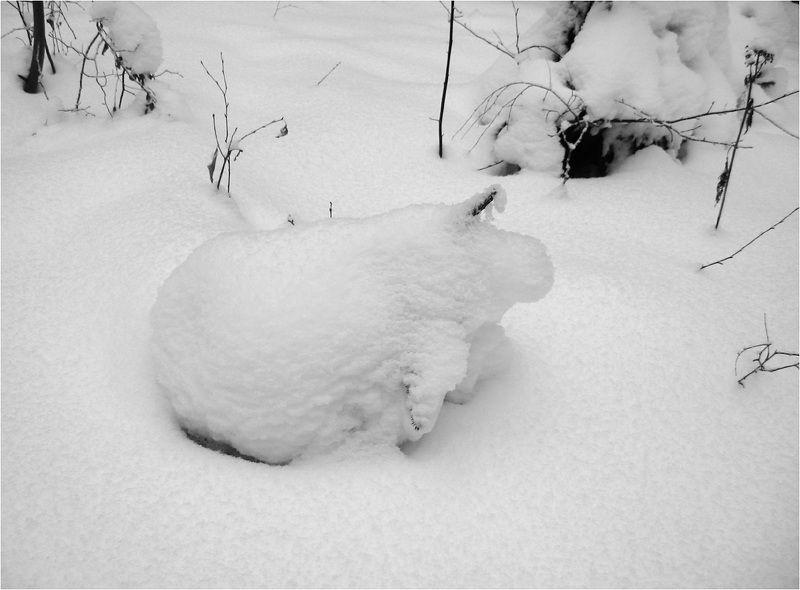 Год снежного поросенкаphoto preview