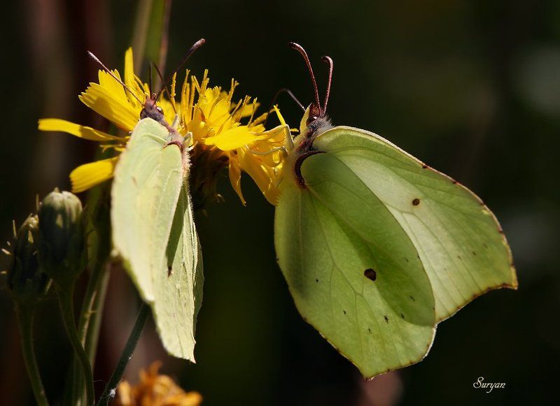 лето, трава, бабочка — Скажите, как ваше имя-отчество? — Марфа Васильевна я…photo preview