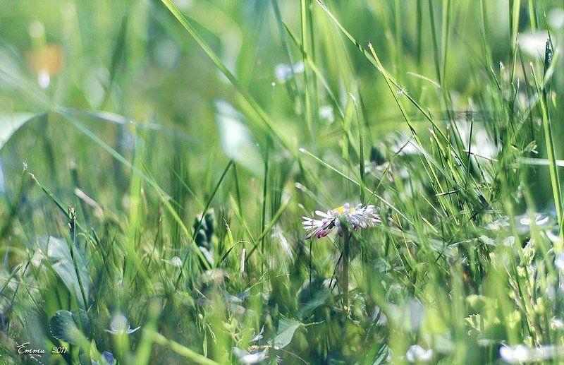 трава, природа В траве...photo preview