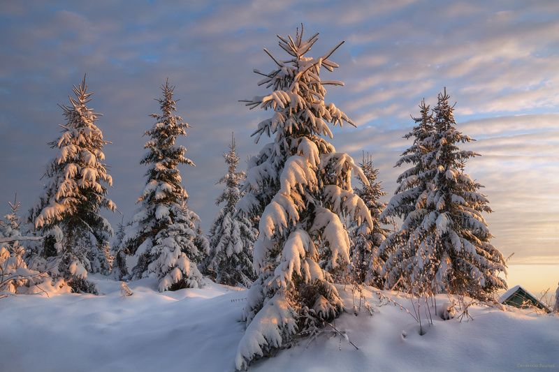 зима, закат, лес, холм, мороз, снег, вечер, ель Тишина зимнего вечераphoto preview