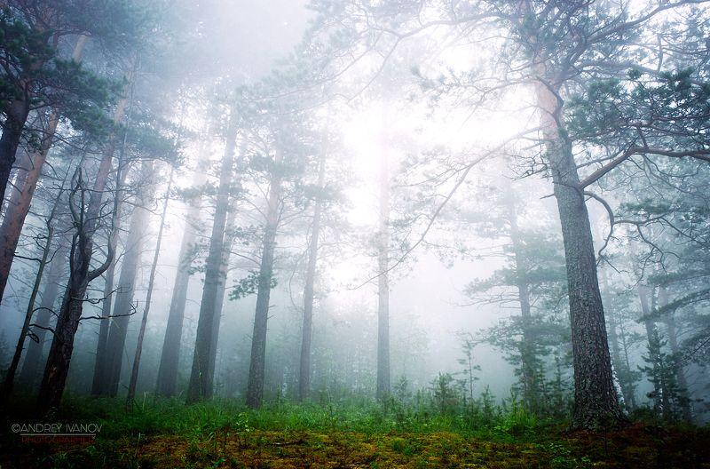 пейзаж природа кемеровская область туман утро Туманное утроphoto preview