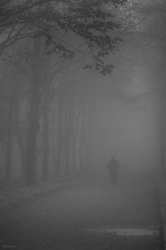утро, парк, туман ***photo preview