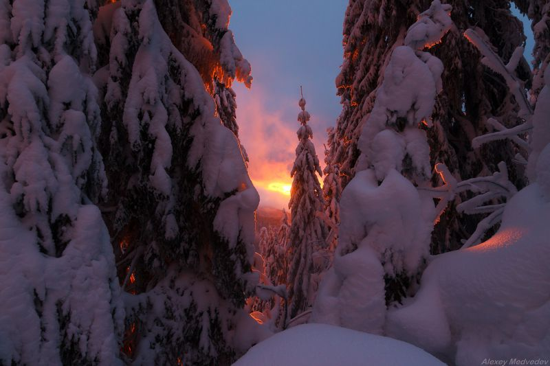 горы, гори, Закарпаття, зима, Карпати, Свидовець, лопухів, лопухов, свидовец, карпаты, закарпатье, свет, закат, солнце, яркий Сказки зимниеphoto preview