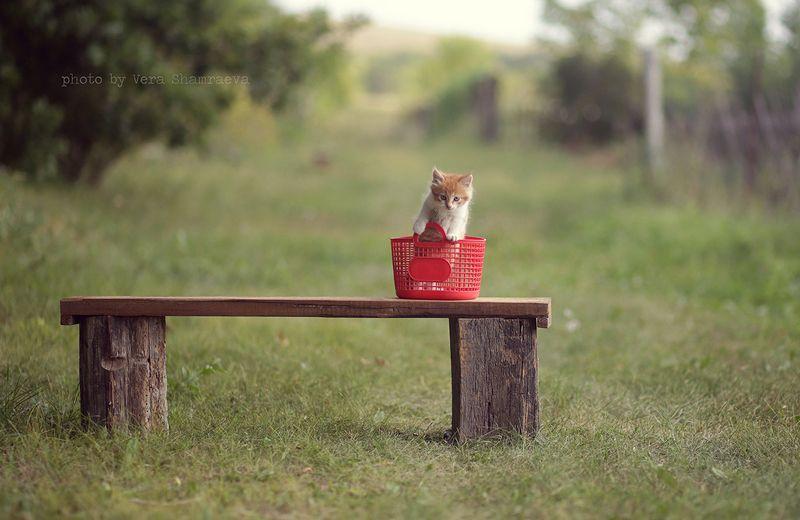 корзина котенок лето Малышphoto preview