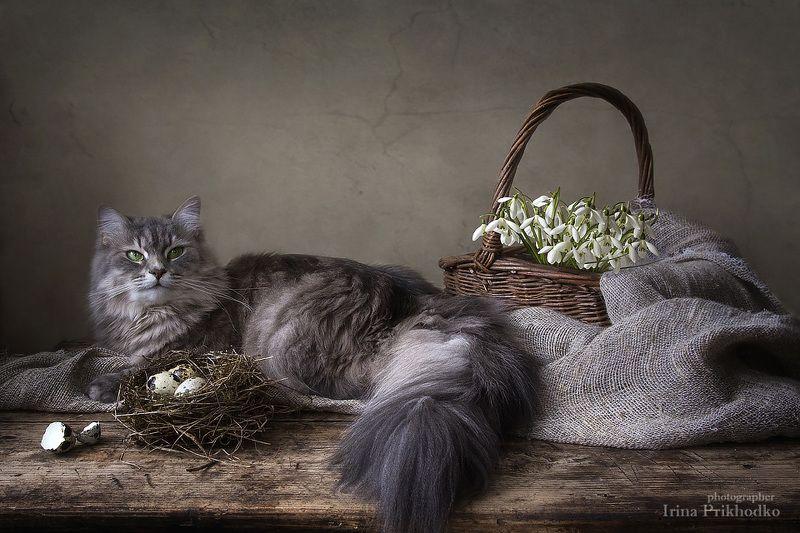 фото животных, домашние животные, кошка масяня, весенний натюрморт, перепелиные яйца, пожснежники А у Масяни уже веснаphoto preview