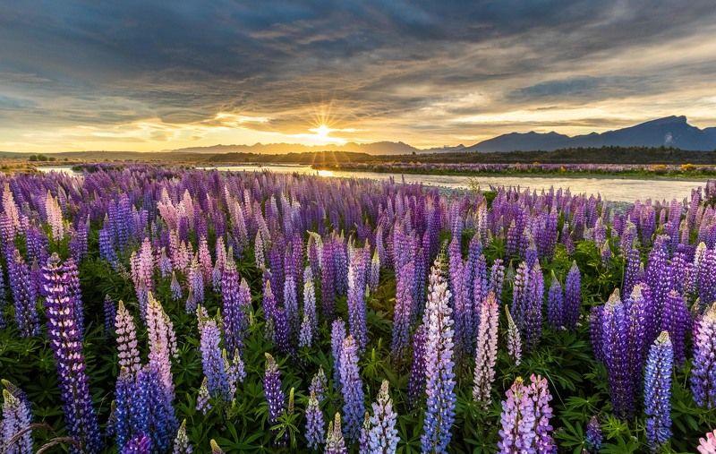 Новозеландские пейзажыphoto preview