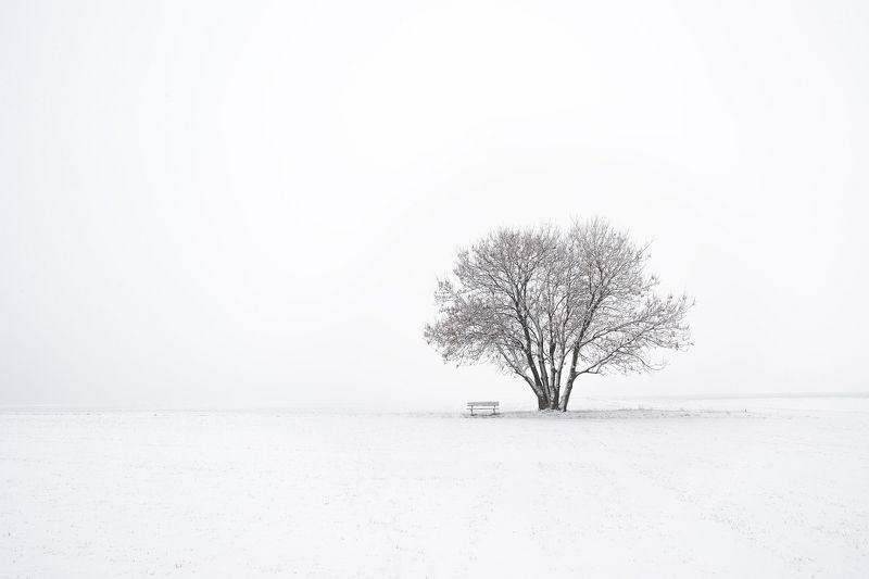 зима, дерево, поле Зимний минимализмphoto preview