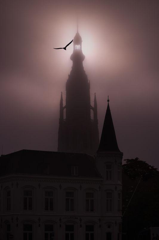 #city, #church, #fog, #bird Church of Breda on a foggy morningphoto preview