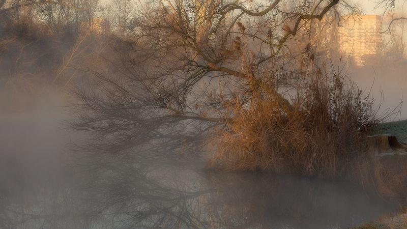 утро, туман, город, ветви, камыш, вода, отражения Фрагмент туманного утраphoto preview