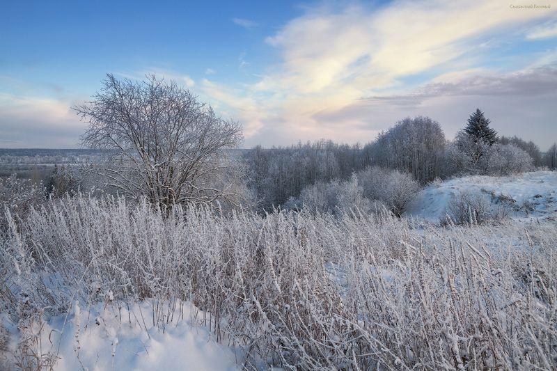 зима, закат, лес, мороз, снег, вечер, ель Пушистый зимний вечерphoto preview