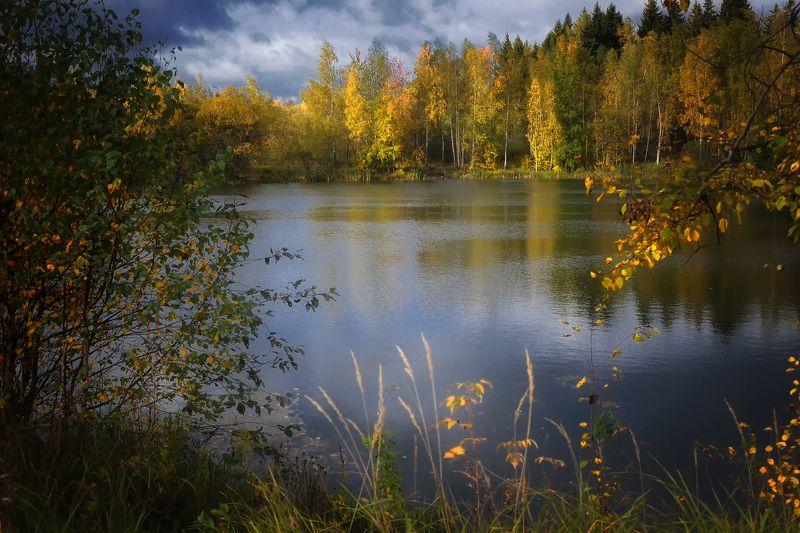 лес, природа, пейзаж, осень, река, вода, ручей, подмосковье Осеньюphoto preview