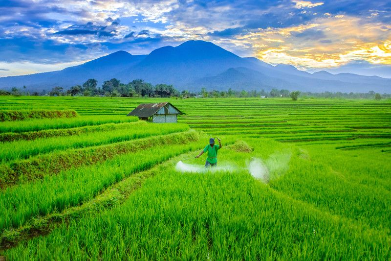 story morning farmer on paddy fields with amazing light in mountain rangephoto preview