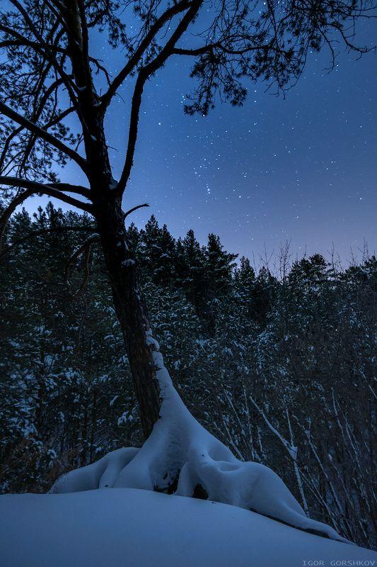 ночь,звёзды,звёздное небо,лес,снег,зима,дерево,корни,сосна,пейзаж,природа,нижняя кама,татарстан, Звёздная ночь в зимнем лесуphoto preview