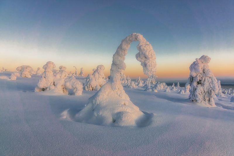 лапландия, Финляндия, пейзаж, природа, tykky, закат Снежные фигуры в парке Riisitunturi -3. photo preview
