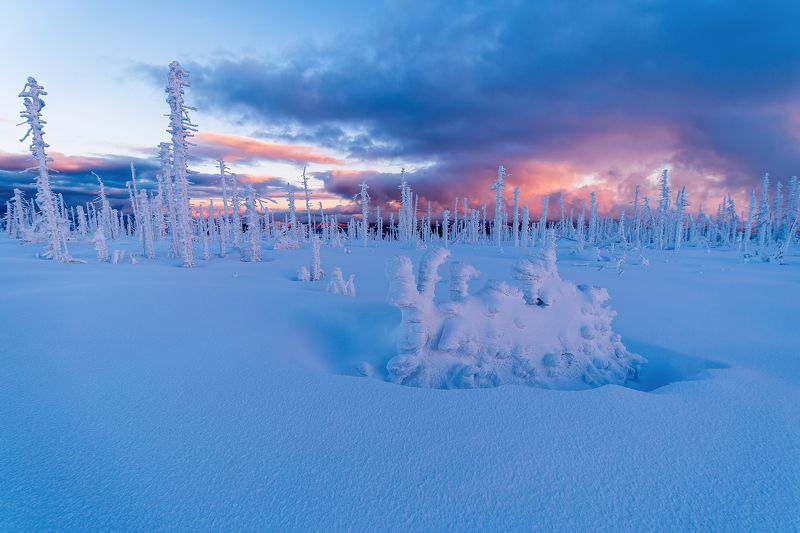 sumava,europe,czech,winter,snow,snowy,nobody,sunrise,sunset, Freshly snowphoto preview