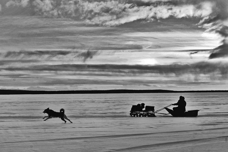 зима, снег, озеро, собака, апатиты По озеру на рыбалкуphoto preview
