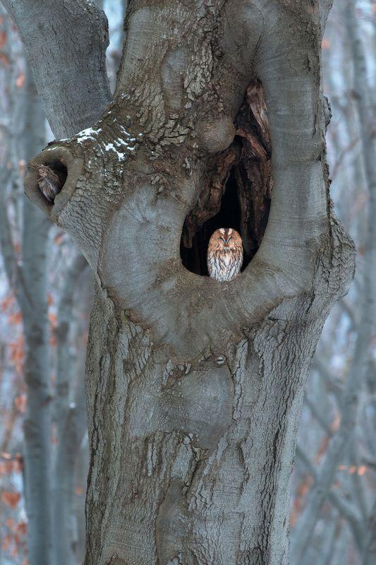 лесной стражphoto preview