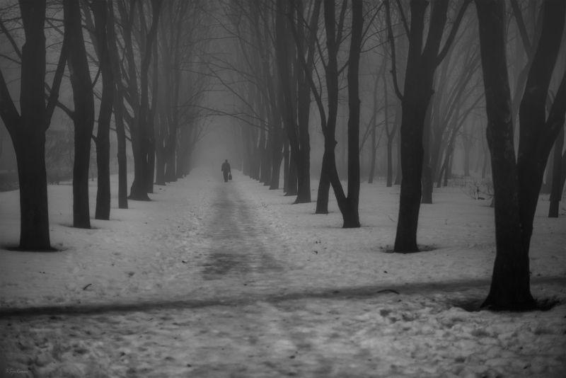 зима, февраль, парк, аллея Февраль уходит ...photo preview