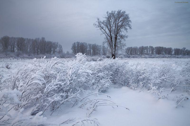 зима, снег, мороз, трава, тополь, поле, поляна, дерево Белые травыphoto preview