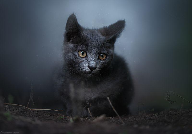украина, коростышев, милый, котенок, нежность, сказка, душа, глаза, волшебный, гармония, глубина, красивый, свет, боке, фотограф, чорный, \