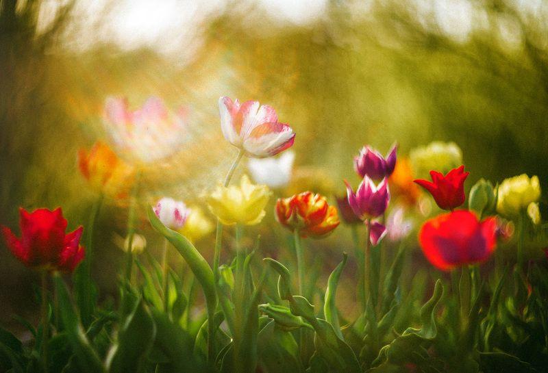 Калейдоскоп весны...photo preview
