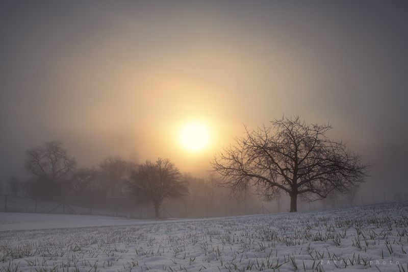зимние туманы,sun,winter,snow,trees,tree,zanfoar,czech republic,bohemia,morvia,nikon d750,nature,landscape зимние туманыphoto preview