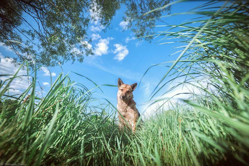 весна,взгляд,гармония, детство,доверие,единение, жизнь,искренность, преданность,собака,трава, украина,чистота, коростышев, фотограф, чорный, \