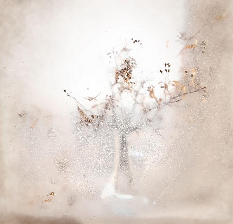 этюд,свет,липа,натюрморт Царство снаphoto preview