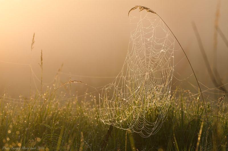 паук, паутина, макро, роса, май, весна, утро, украина Майская паутинаphoto preview