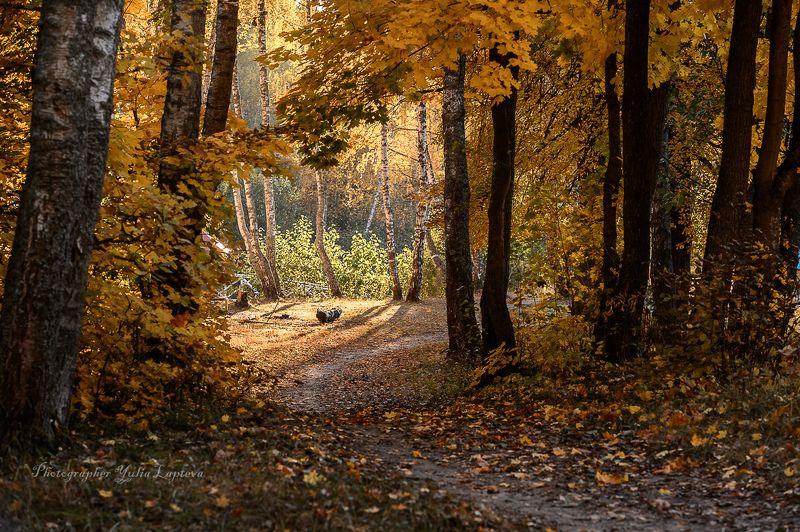 пейзаж,осень,природа,золотая осень,вечерний свет,закат,россия,красота \