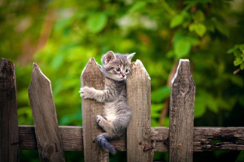 кот на заборе ***photo preview