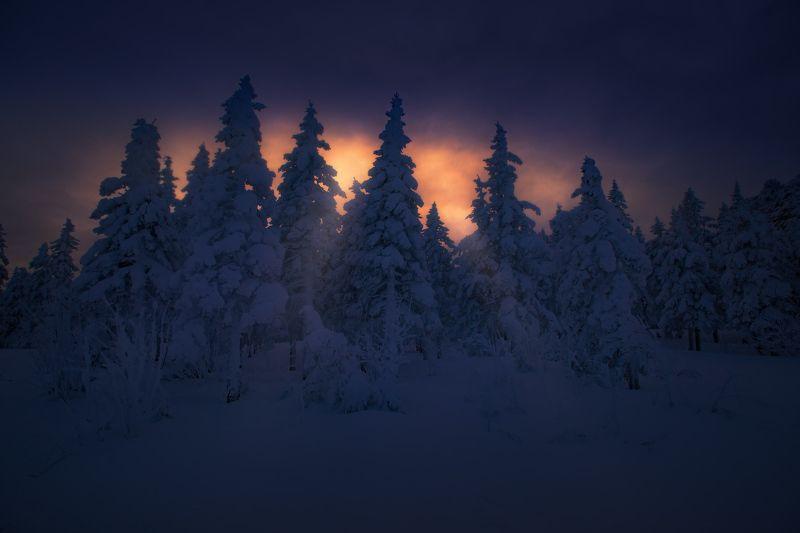 урал, таганай, зима Сквозь елиphoto preview