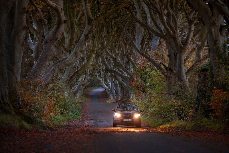 ireland, dark hedges, county antrim The Dark Hedges фото превью