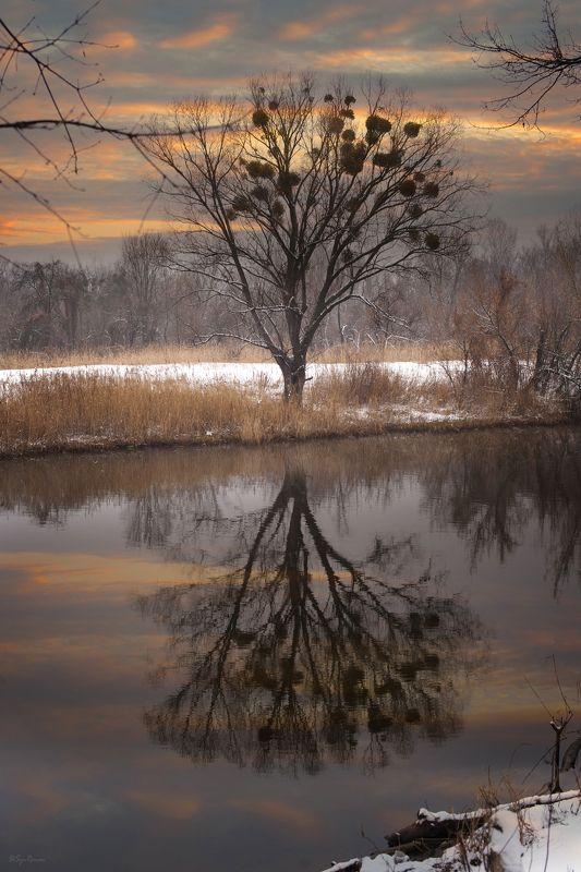 зима, февраль, берег, река,лес На закате зимы ...photo preview