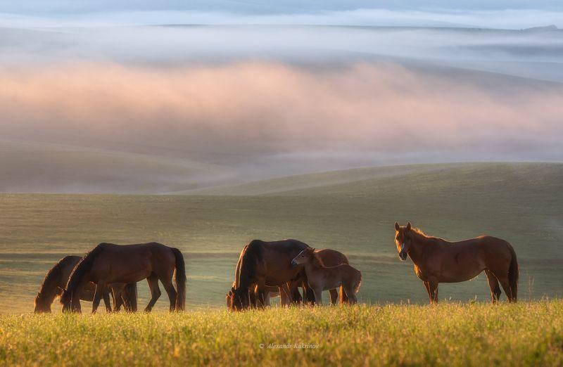 алтай, лето, рассвет, утро Алтайское утро...photo preview