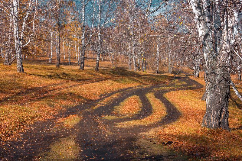 Пейзаж, осень, лес, опавшая листва, березы,  Дороги осениphoto preview
