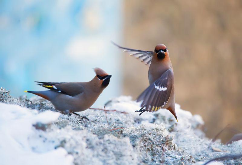 Птицы,Орск,Россия,Оренбуржье,природа,зима Отстань, я позирую!photo preview