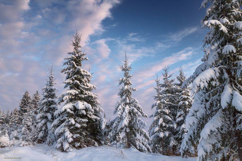 зима, снег, мороз, ель, лес, мороз Ельникphoto preview