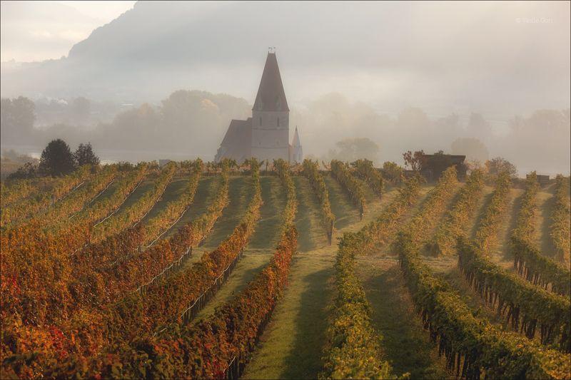 австрия,weißenkirchen,осень,белая церковь,wachau,österreich,виноградники. Белая церковь фото превью