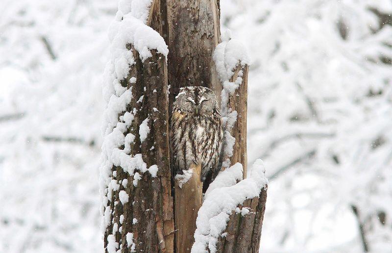 В снегопад...photo preview