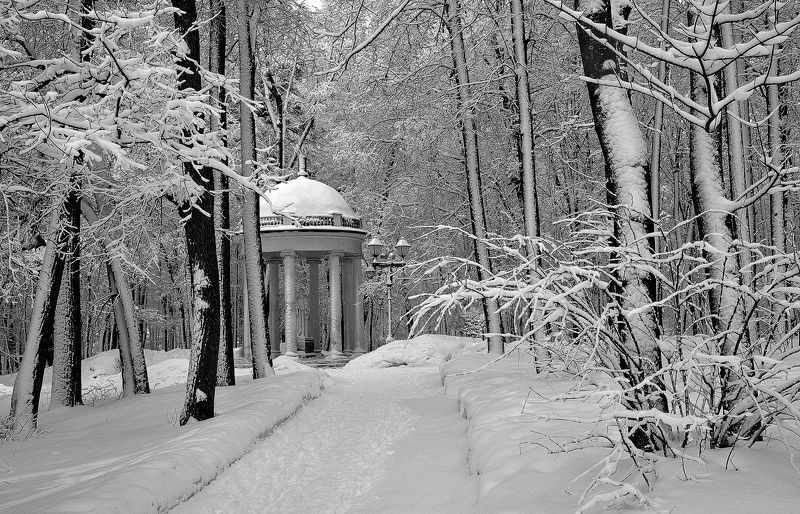сергей алексеев, В зимнем паркеphoto preview